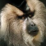 99th-Monkey-Profile